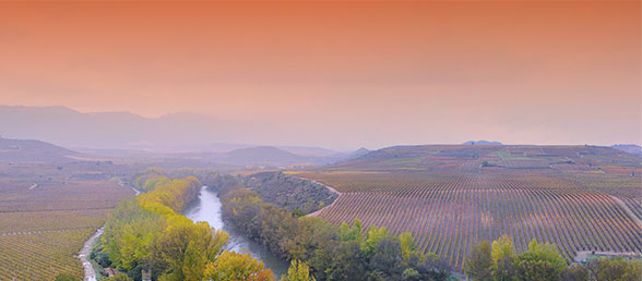 Vineyards of Spain
